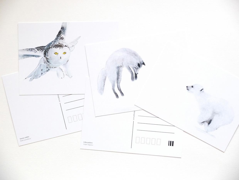 pohlednice sněhobílých zvířat