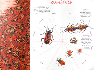 Ilustrace do časopisu Ahoj divočino, od2020